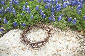 foto of thorns  - A crown of thorns sits on rock beside a patch of Texas bluebonnets - JPG