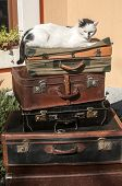 image of old suitcase  - Old vintage retro used leather suitcases stacked and placed one on another and cat on top in house backyard - JPG