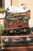stock photo of old suitcase  - Old vintage retro used leather suitcases stacked and placed one on another and cat on top in house backyard - JPG