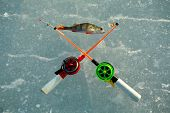 image of sun perch  - A fished out lake perch and two fishing rods for winter fishing are lying on the ice of Lake Ladoga Russia - JPG