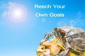 pic of craw  - metaphor of Reach Your Own Goals with turtle and sun background. ** Note: Shallow depth of field - JPG