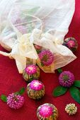stock photo of red clover  - Balls of the green tea and flowers of red clover - JPG