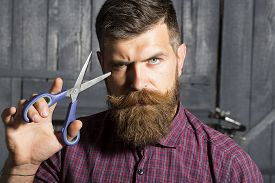image of long beard  - Portrait of unshaven guy in purple checkered shirt with long beard and handlebar moustache showing sharp scissors looking forward standing on wooden wall background horizontal picture - JPG