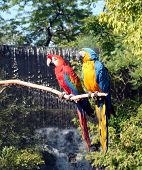 Macaws And Waterfall