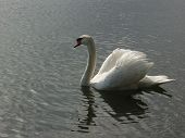 Swan 935 poster