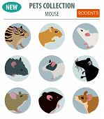 Pets_rodents_rat_6 poster