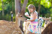 Child Feeding Wild Deer At Zoo. Kids Feed Animals. poster