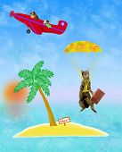 stock photo of parachute  - Cat is flying to a lonley island with a parachute - JPG