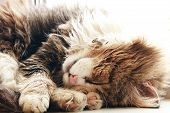 Sleeping Cat Close Up, Cozy Yard Cat Found Its Home, Animal Rescue poster