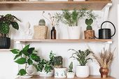 Stylish Wooden Shelves With Green Plants And Black Watering Can. Modern Hipster Room Decor. Cactus,  poster