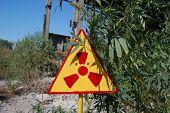 Marijuana cannabis sativa. Lost city.Near Chernobyl area.Kiev region,Ukraine