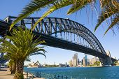 Sydney Harbour Bridge Palm Trees