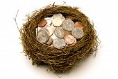 Nest Full of Money For Savings