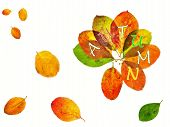 image of aronia  - Variation of colorful autumn leaves of the tree Aronia on a white background - JPG