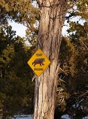Bear Crossing Close Up