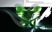 pic of girdles  - Digital illustration  of pelvic girdle in    colour background - JPG