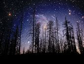 View of the heavens - A forest silhouetted with a star field in the distance. Star image courtesy NA