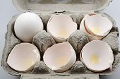 Egg And Egg Shells In Container