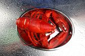 Red lobster on tray, on grey background