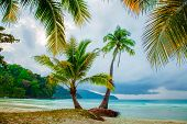 Rainy day, palm trees and beach