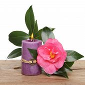 Candle And Camellia Flower