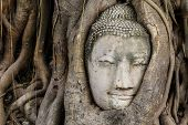 stock photo of buddha  - Buddha head in a tree trunk - JPG