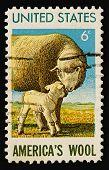 Wool 1971