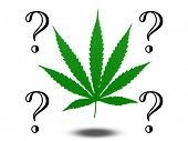 picture of marijuana leaf  - Marijuana Questions - JPG