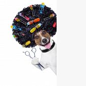 pic of beside  - hairdresser scissors dog beside white banner with hair rollers - JPG