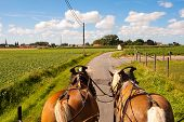 Through The Flemish Fields With Horse And Covered Wagon.
