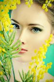 picture of mimosa  - Portrait of a beautiful girl with mimosa flowers - JPG