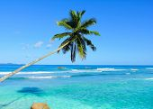 Dream Coconut Trees