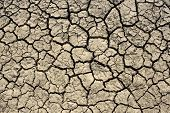 Dried Soil With Cracks