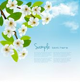 Nature background with blossoming tree brunch and blue sky. Vector illustration.