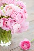 stock photo of buttercup  - White and pink ranunculus  - JPG