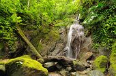 stock photo of jungle exotic  - Colombia wild Darien jungle of the Caribbean sea near Capurgana resort and Panama border - JPG