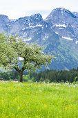 Austrian Alps near Hallstatt, Upper Austria, Austria