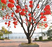 A lot of Chinese lanterns on a tree in Park