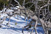 Winter in the mountain navacerrada madrid spain