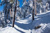 Winter in the mountain navacerrada,, madrid ,spain,
