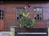 Beauty Christmas Tree