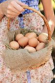 Eggs in wicker basket in female hands outdoors