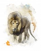 Watercolor Digital Painting Of Walking Lion