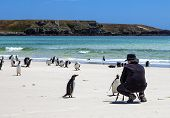 stock photo of falklands  - Photographer on the set with penguins in the Falkland Islands - JPG