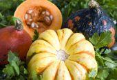 Pumpkin Different Types