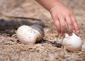 Child's Hand Picking Egg On The Ground