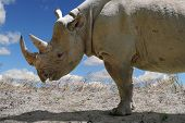 Rhinoceros in profile view outdoors
