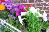 Flowers in decorative pots in shopping cart on bricks background