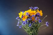 Beautiful wild flowers on bright background