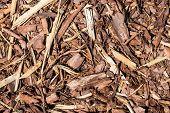 Wooden Mulch